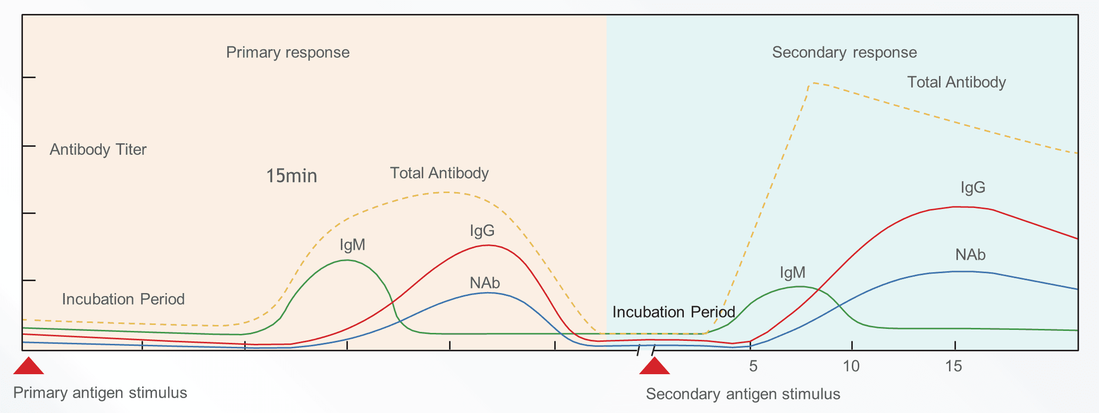 Three antibody whole process monitoring, vaccine effect evaluation is more comprehensive